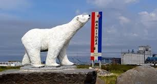 Autarquia canadiana da 'Capital Mundial do Urso Polar' elogia portugueses